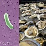 Sức khỏe đời sống - Cảnh báo tử vong do vi khuẩn ăn thịt người tắm biển