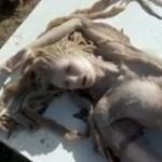 """Phi thường - kỳ quặc - Sự thật bất ngờ về """"xác nàng tiên cá"""" trên bãi biển"""