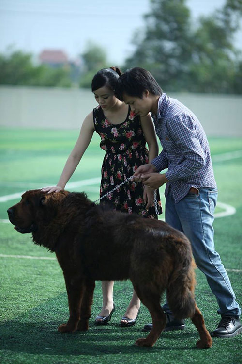 8X Việt nuôi chó đắt nhất hành tinh thành đại gia - 11