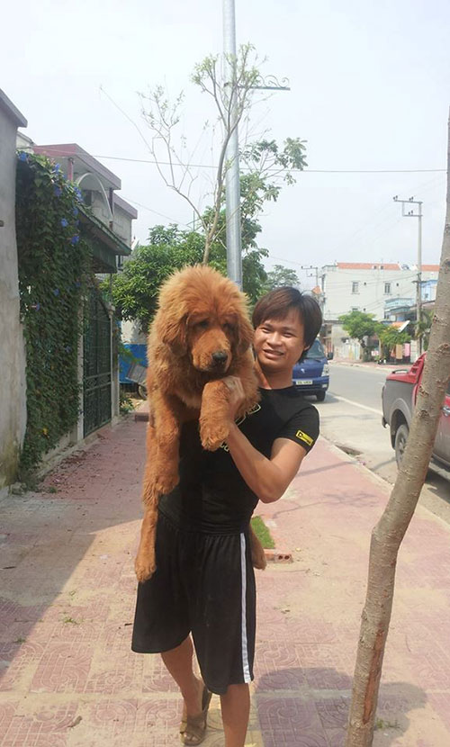 8X Việt nuôi chó đắt nhất hành tinh thành đại gia - 3