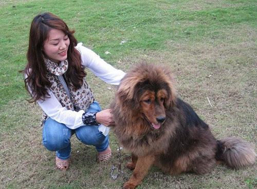 8X Việt nuôi chó đắt nhất hành tinh thành đại gia - 9