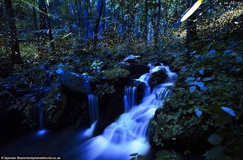 Lạc giữa khu rừng đom đóm tuyệt đẹp ở Mỹ - 2