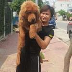 Bạn trẻ - Cuộc sống - 8X Việt nuôi chó đắt nhất hành tinh thành đại gia