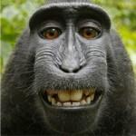 """Phi thường - kỳ quặc - Thực hư bức ảnh khỉ """"tự sướng"""" nổi tiếng"""
