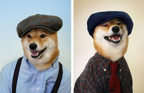 Chú chó mặc đẹp như như tài tử Hollywood - 1