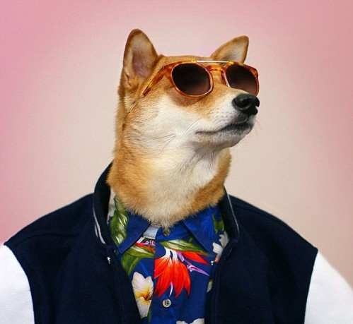 Chú chó mặc đẹp như như tài tử Hollywood - 3