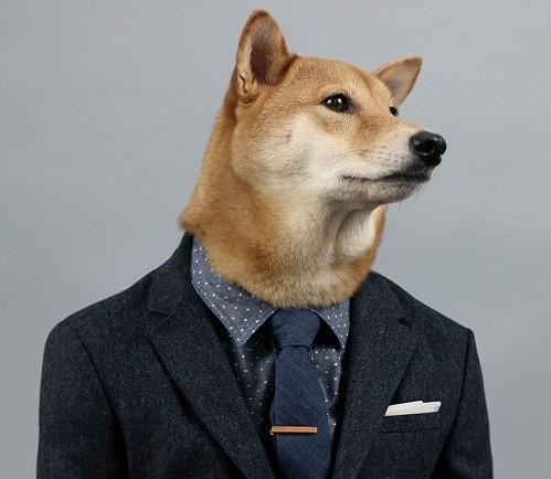Chú chó mặc đẹp như như tài tử Hollywood - 4