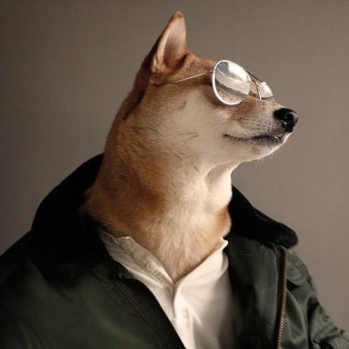 Chú chó mặc đẹp như như tài tử Hollywood - 6