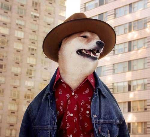 Chú chó mặc đẹp như như tài tử Hollywood - 2