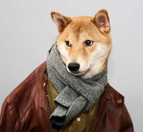 Chú chó mặc đẹp như như tài tử Hollywood - 7