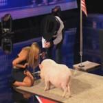 Video Clip Cười - Chú lợn đi thi Got Talent và lọt vào vòng trong