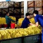 Thị trường - Tiêu dùng - Nông sản xuất sang Trung Quốc tiếp tục gặp khó khăn