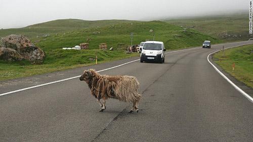 Những ngôi nhà mái cỏ độc đáo ở quần đảo Faroe - 14