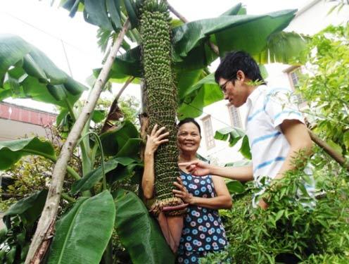 Bà Nguyễn Thị Minh bên cây chuối lạ lùng