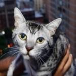 Phi thường - kỳ quặc - Chú mèo vẫn sống sót sau khi rơi từ tầng 12