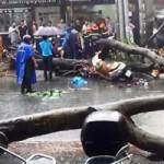 Tin tức trong ngày - Cây bật gốc đè chết người giữa TPHCM