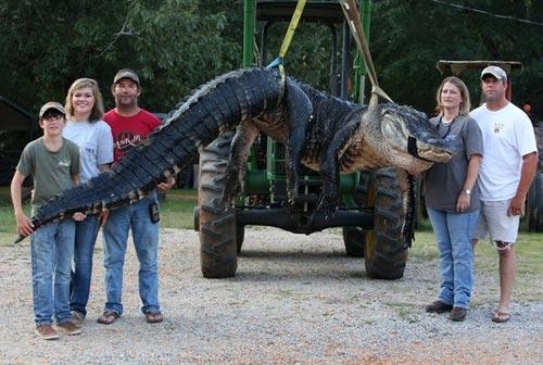 Bắt được cá sấu khổng lồ nặng gần nửa tấn tại Mỹ - 2