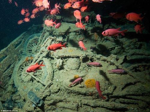 Phát hiện kho xe cổ dưới lòng đại dương - 6