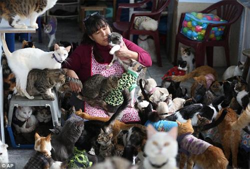 """""""Mẹ"""" của 175 con mèo bị bệnh bạch cầu - 1"""