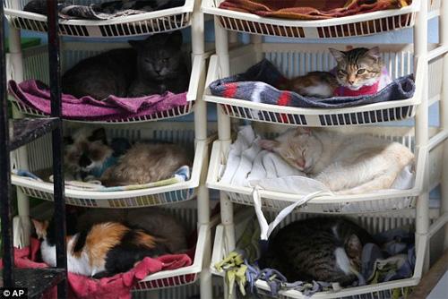 """""""Mẹ"""" của 175 con mèo bị bệnh bạch cầu - 2"""