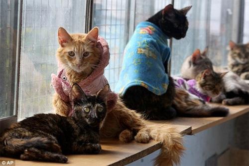 """""""Mẹ"""" của 175 con mèo bị bệnh bạch cầu - 4"""
