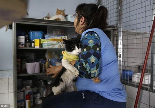 """""""Mẹ"""" của 175 con mèo bị bệnh bạch cầu - 8"""