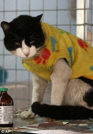 """""""Mẹ"""" của 175 con mèo bị bệnh bạch cầu - 5"""