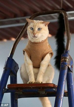 """""""Mẹ"""" của 175 con mèo bị bệnh bạch cầu - 6"""
