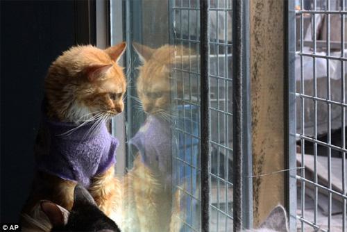 """""""Mẹ"""" của 175 con mèo bị bệnh bạch cầu - 7"""