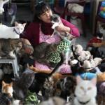 """Bạn trẻ - Cuộc sống - """"Mẹ"""" của 175 con mèo bị bệnh bạch cầu"""