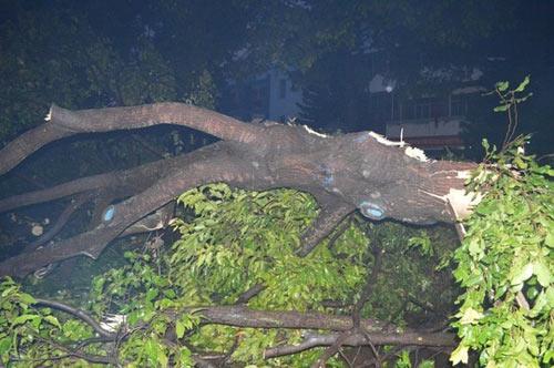 Cây xanh nặng hàng tấn trôi lềnh bềnh giữa phố - 2