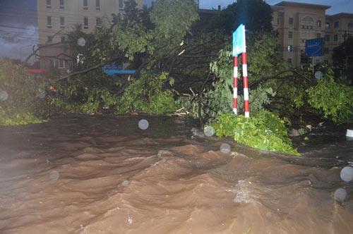 Cây xanh nặng hàng tấn trôi lềnh bềnh giữa phố - 3