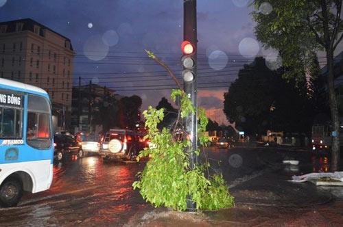Cây xanh nặng hàng tấn trôi lềnh bềnh giữa phố - 4