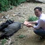 Bạn trẻ - Cuộc sống - Giấc mơ làm giàu của cử nhân bán thịt lợn đen
