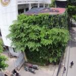 Thị trường - Tiêu dùng - Người Hà Nội chi 1,5 tỷ đồng phủ cây xanh kín nhà