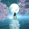 Thơ tình: Mua trăng