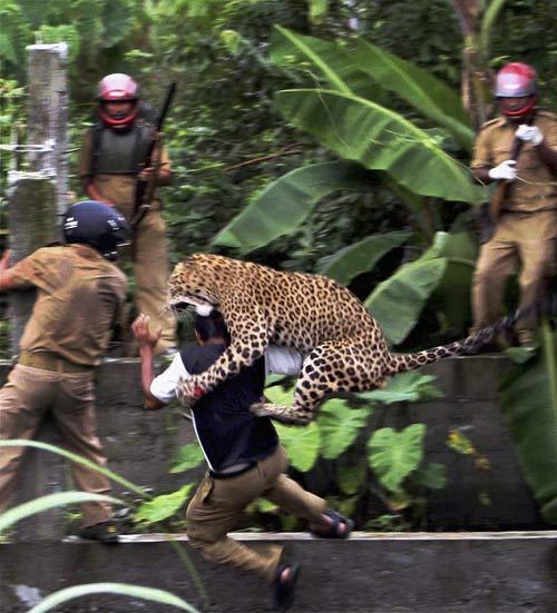 Ấn Độ: Lão bà phản công đánh chết báo hoang - 2