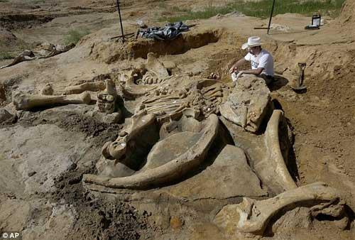 Phát hiện bộ xương khổng lồ của sinh vật thời kỷ băng hà - 1
