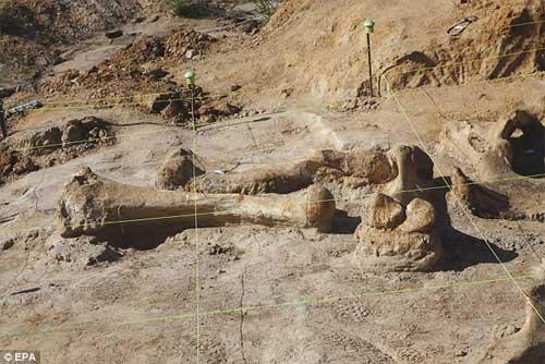 Phát hiện bộ xương khổng lồ của sinh vật thời kỷ băng hà - 3