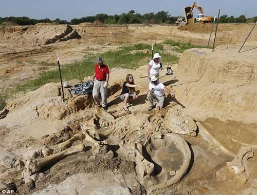 Phát hiện bộ xương khổng lồ của sinh vật thời kỷ băng hà - 5