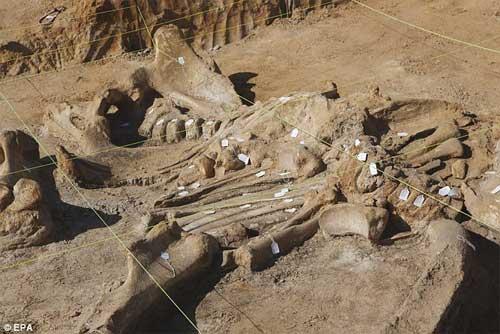 Phát hiện bộ xương khổng lồ của sinh vật thời kỷ băng hà - 6