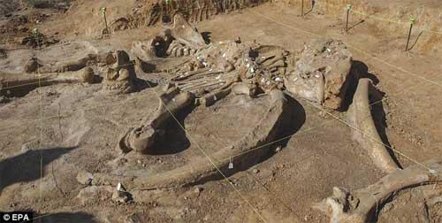Phát hiện bộ xương khổng lồ của sinh vật thời kỷ băng hà - 7