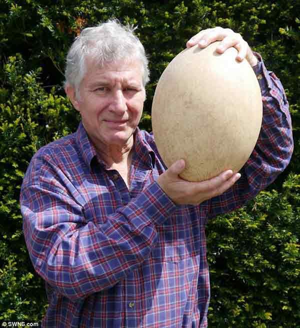 Quả trứng chim voi 500 tuổi giá hơn 80.000 USD - 2