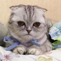 """""""Chú mèo buồn"""" trở thành ngôi sao mạng xã hội"""
