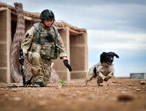 Chuyện cảm động về 8 chú chó trung thành nhất thế giới - 4