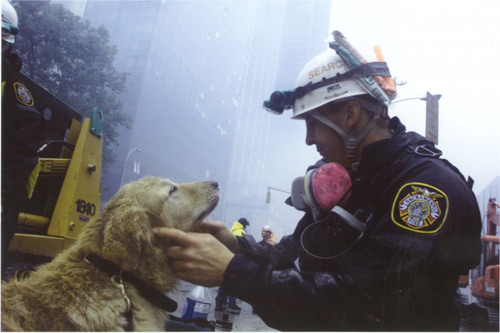 Chuyện cảm động về 8 chú chó trung thành nhất thế giới - 6