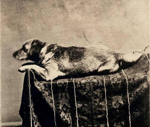Chuyện cảm động về 8 chú chó trung thành nhất thế giới - 7