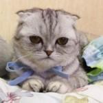 """Phi thường - kỳ quặc - """"Chú mèo buồn"""" trở thành ngôi sao mạng xã hội"""