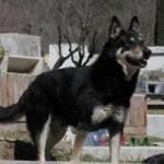 Tin tức trong ngày - Chuyện cảm động về 8 chú chó trung thành nhất thế giới