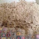 Phi thường - kỳ quặc - Kinh hãi 5.000 ong bắp cày làm tổ trên giường